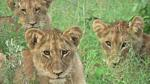 Private Family Safari to Kruger National Park