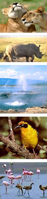 Kenya Rift Valley and Lakes Safari