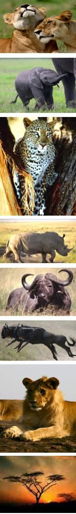 7 Day Kenya Safari Catch the Big 5