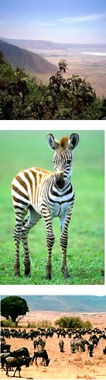 3 Days: Natures Paradise Safari in Ngorongoro Crater