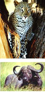 Kenya : Aberdares Walking Safari