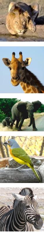 Kruger National Park and Timbavati Safari