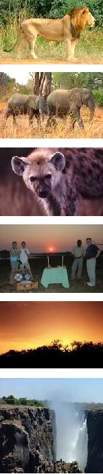 Luangwa National Park and Victoria Falls Safari