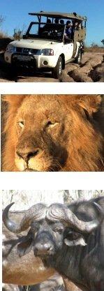 Private Small Group Kruger Park Safari