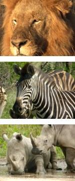 Simply Safari - A journey of a lifetime