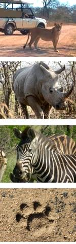 Kruger 10-Day Northern Kruger Adventure